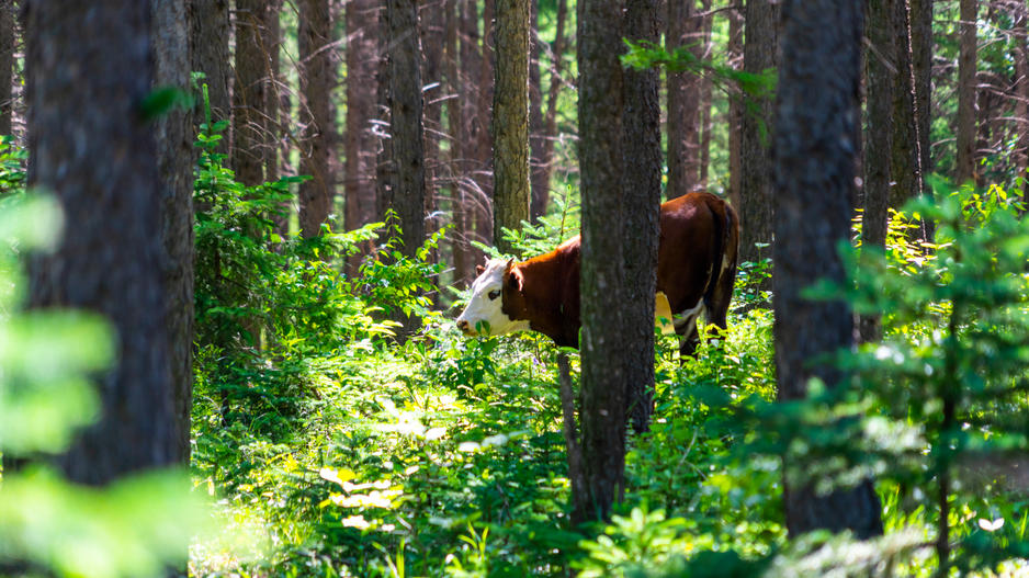 森林 公園 京北